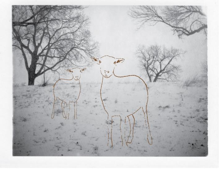 Lamb-family