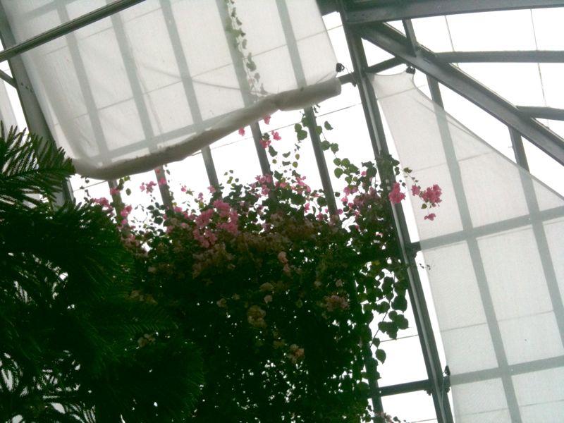 Arboretum 4